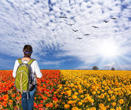Woman admiring the floral field Stock Photo