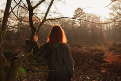 Woman admiring sunset in forest Royalty Free Stock Image