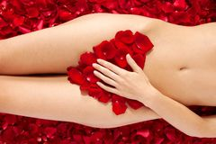 Woman against petals of red roses Stock Photography