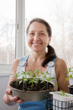 Woman aged grows vegetables Royalty Free Stock Photography