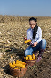 Woman agronomist  in corn field Stock Images