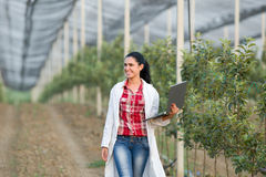 Free Woman Agronomist In The Orchard Royalty Free Stock Photo - 56863585