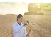 Woman agronomist with magnifer in field Royalty Free Stock Images