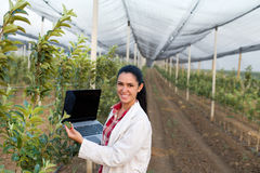 Woman agronomist in the orchard Royalty Free Stock Image