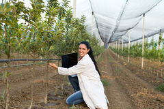 Woman agronomist in the orchard Royalty Free Stock Photography