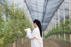 Woman agronomist in the orchard Stock Images