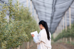 Woman agronomist in the orchard Stock Photography