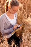 Woman agronomist or a student analyzing wheat ears Stock Image