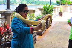 A woman with albino snake. A woman posses with an albino snake around her neck at the Putrajaya cruise terminal Royalty Free Stock Images