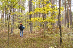 Woman alone walking in the forest Stock Image