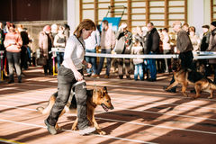 Woman and Alsatian Wolf Dog in dog show in Gomel, Belarus Stock Image