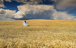 Woman amomg field of wheat before thunderstorm Royalty Free Stock Photography