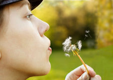 Woman And Dandelion Royalty Free Stock Photo