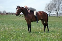 Free Woman And Horse Royalty Free Stock Photography - 2379767