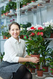Woman with anthurium plant in  store Royalty Free Stock Photos