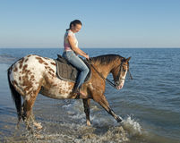 Woman and appaloosa horse. Playing in the sea Stock Image