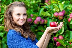 A woman in the apple garden Stock Image