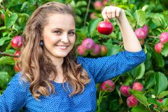 A woman in the apple garden Royalty Free Stock Photo