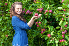 A woman in the apple garden Royalty Free Stock Images