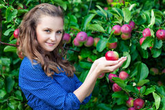 A woman in the apple garden Stock Photography
