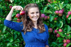 A woman in the apple garden Stock Images