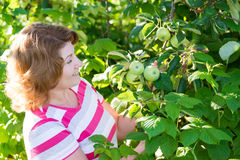 Woman in the apple orchard Royalty Free Stock Images