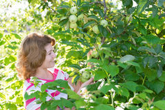 Woman in the apple orchard Royalty Free Stock Photos