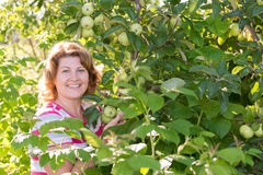 Woman in the apple orchard Royalty Free Stock Image