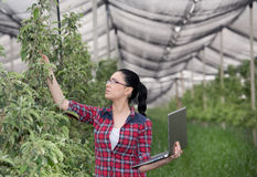 Woman in apple orchard Royalty Free Stock Photos