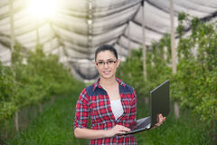 Woman in apple orchard Royalty Free Stock Photo