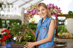 Woman with apple tree bonsai in nursery Stock Images