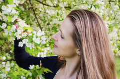 Woman with apple tree flowers Royalty Free Stock Images