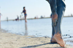 Woman applying mineral blue mud on legs at Sivash lake Stock Photography