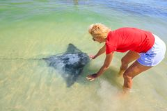Woman approaches Eagle Ray. Blonde woman approaches an Australian Eagle Ray close to shore in Hamelin Bay, Margaret River Region, Western Australia. Hamelin Bay Royalty Free Stock Photo