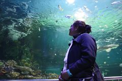 Woman in aquarium Royalty Free Stock Photography