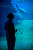 Woman in the aquarium. Stock Images