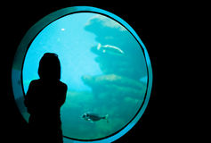Woman in the aquarium. Stock Photo