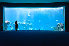 Woman in the aquarium Royalty Free Stock Photos