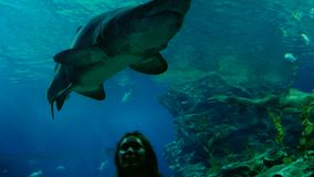 Woman in the aquarium watching at the great shark. 3840x2160 stock footage