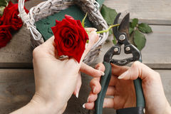 Woman arranging bouquet of red roses Stock Images