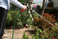 Woman with arthritis watering the garden. Living with pain series. Senior woman with rheumatoid arthritis watering the garden with a hose royalty free stock photos