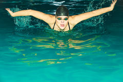Woman athlete swimming butterfly stroke in pool. Stock Images
