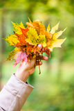 Woman in Autumn or fall with colorful leaves Royalty Free Stock Photo