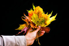 Woman in Autumn or fall with colorful leaves Royalty Free Stock Image