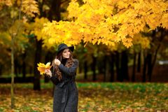 Woman with autumn leaves in hand and fall yellow maple garden background. Portrait of very beautiful young girl in autumn park Royalty Free Stock Images