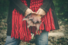 Woman with autumn leaves in hands Stock Photo