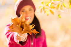 Woman autumn leaves Stock Images