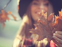 Woman in autumn park picking gold leaves Stock Images