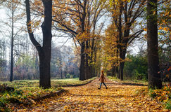 Woman in the autumn park Stock Images