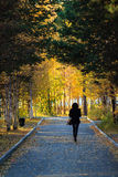Woman in autumnal alley. Silhouette of a Woman walking in autumnal alley Stock Photos